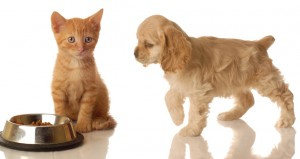 puppy and kitten at food dish